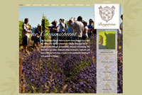 Bergstrom Wines home page