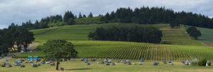 Stoller Family Estate Vineyard